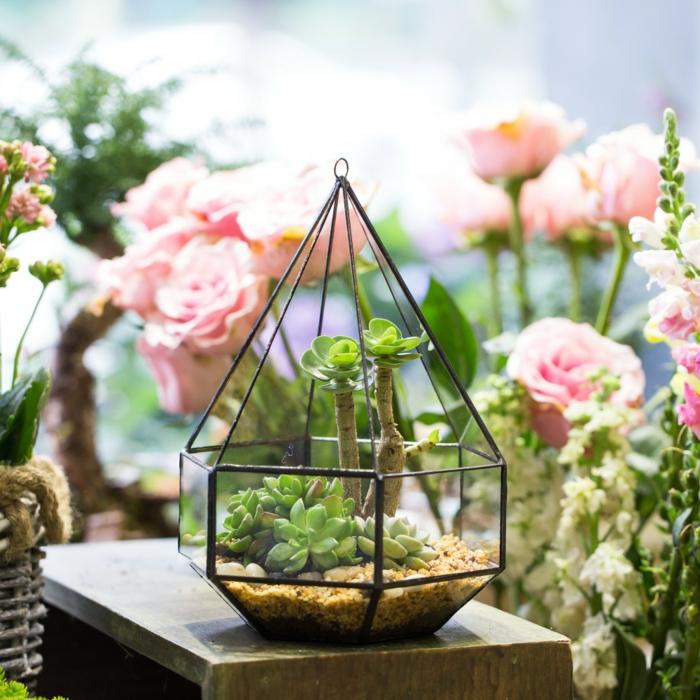 idée diy terrarium plantes grasses