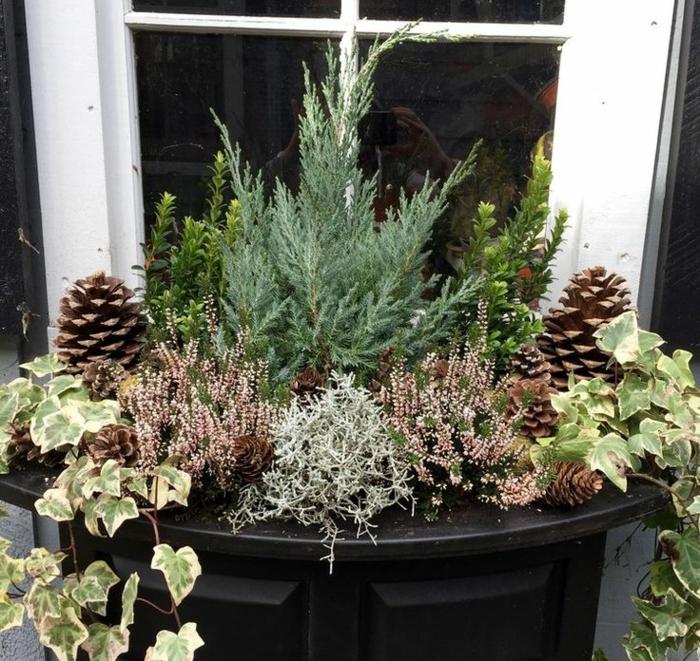idée jardin jardinière d'hiver