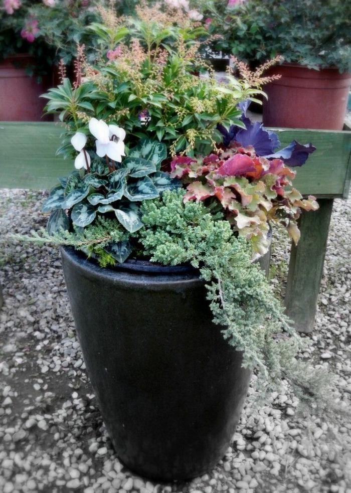 idée pour composer une jardinière d'hiver