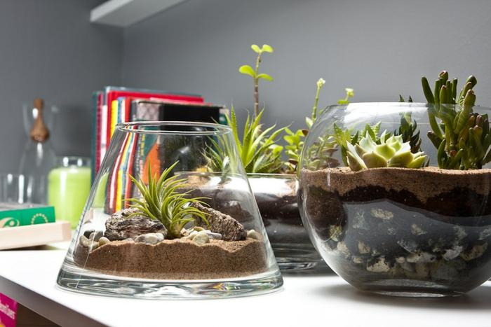 idée réalisation terrarium plantes grasses