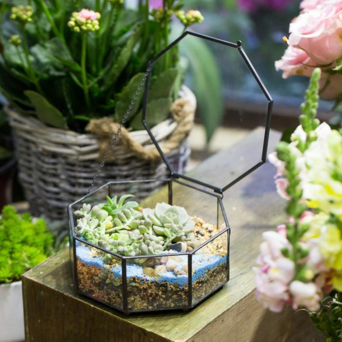 idée terrarium plantes grasses original