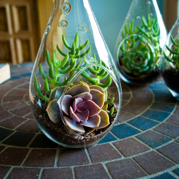idée terrarium plantes grasses verre