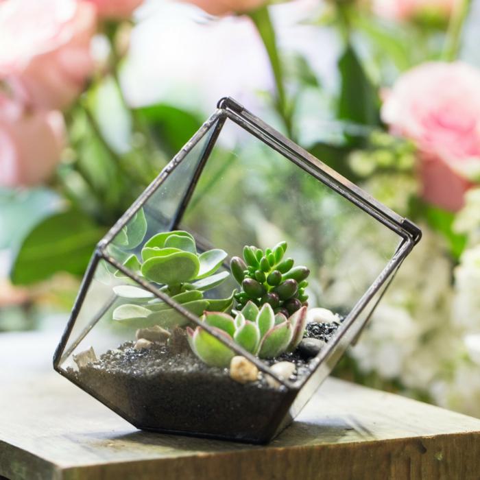 idée terrarium plantes grasses