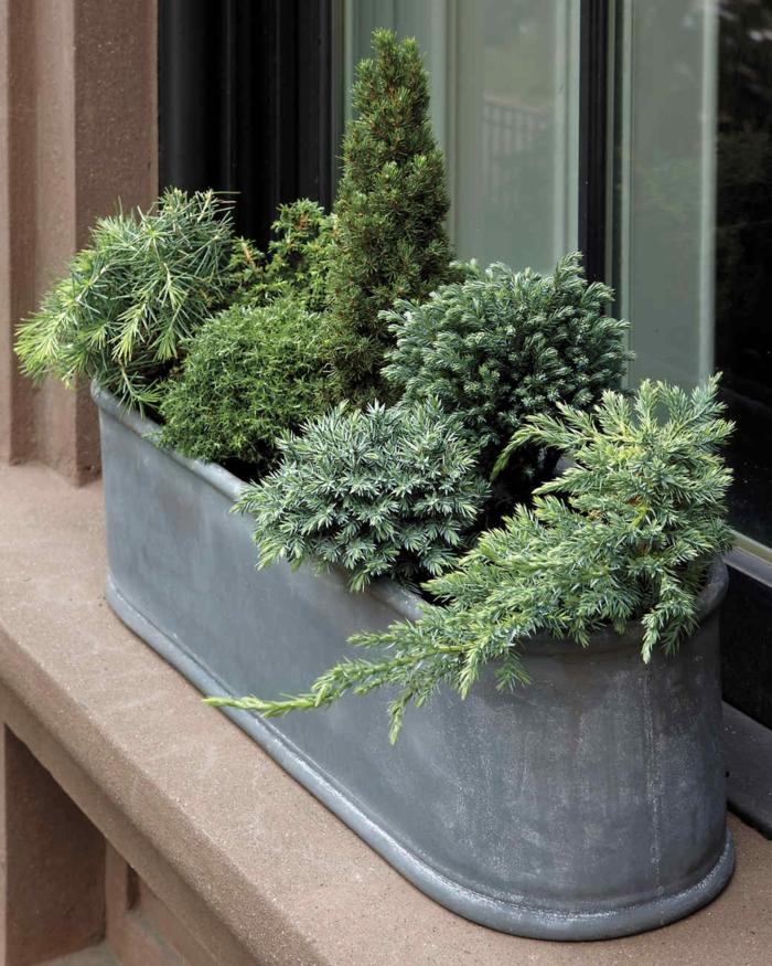 jardinière d'hiver plantes à feuilles persistantes
