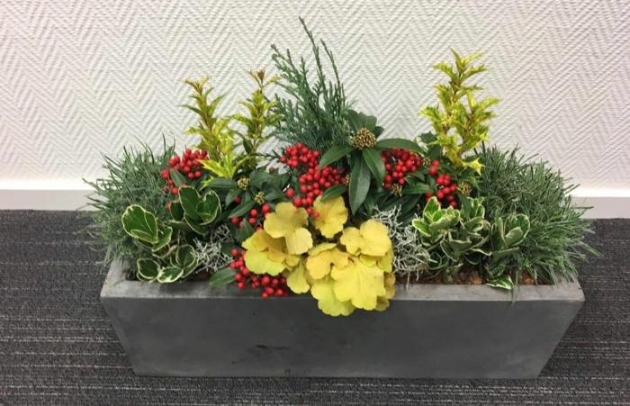 jardinière d'hiver plantes en couleurs vives