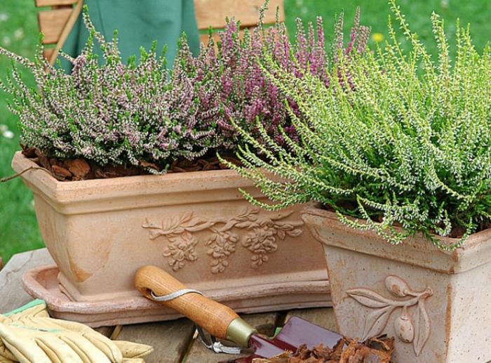 jardinière d'hiver plantes en pot de terre cuite