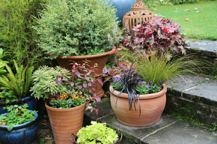 jardinière d'hiver variété de plantes