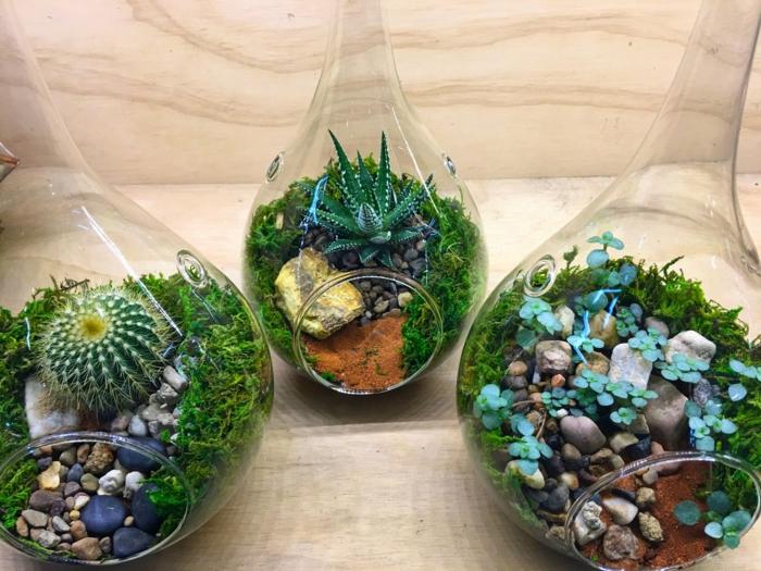jolie déco terrarium plantes grasses
