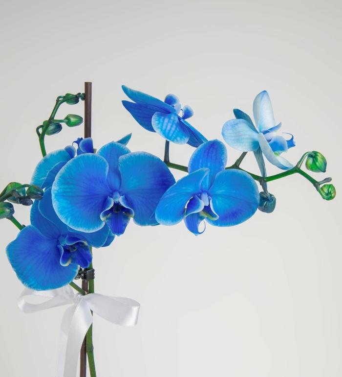 le langage des fleurs orchidée