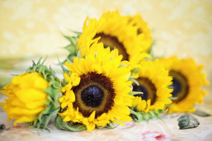 le langage des fleurs tournesol bouquet