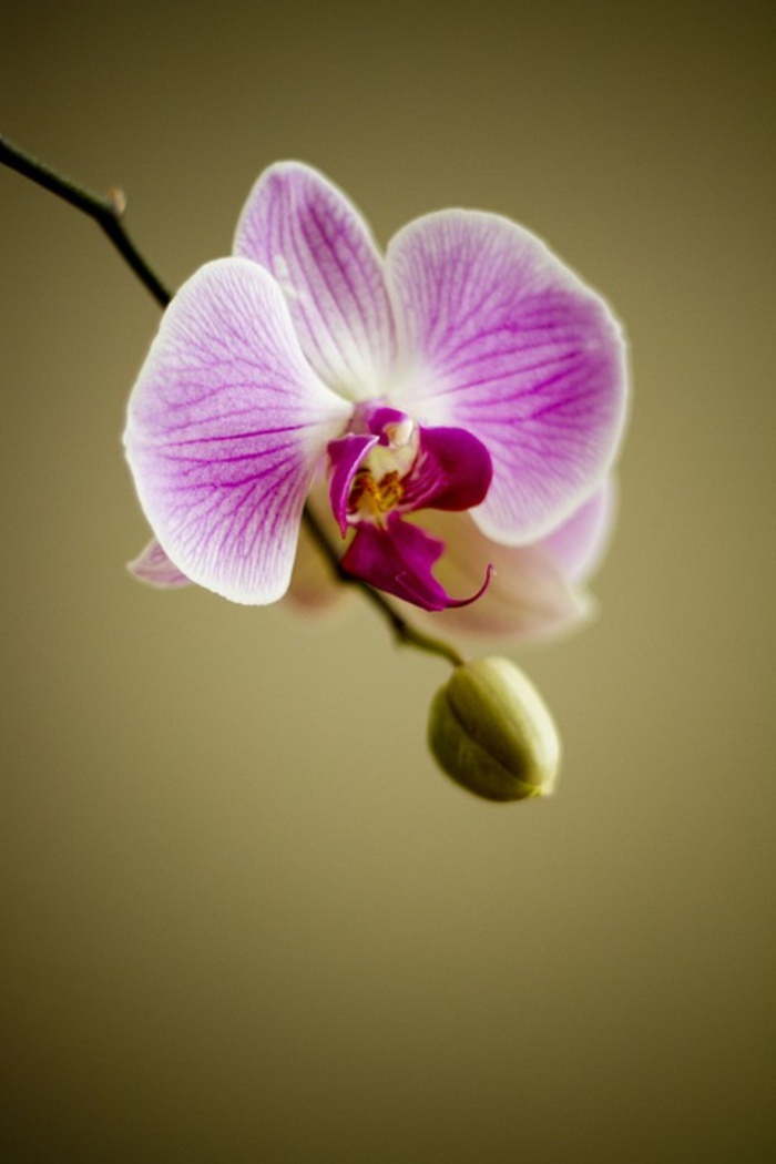 orchidée le langage des fleurs