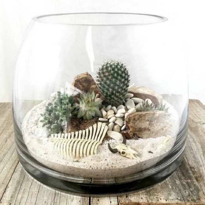 paysage désertique terrarium plantes grasses