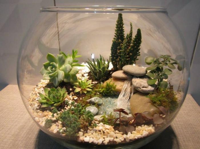 petit écosystème terrarium plantes grasses