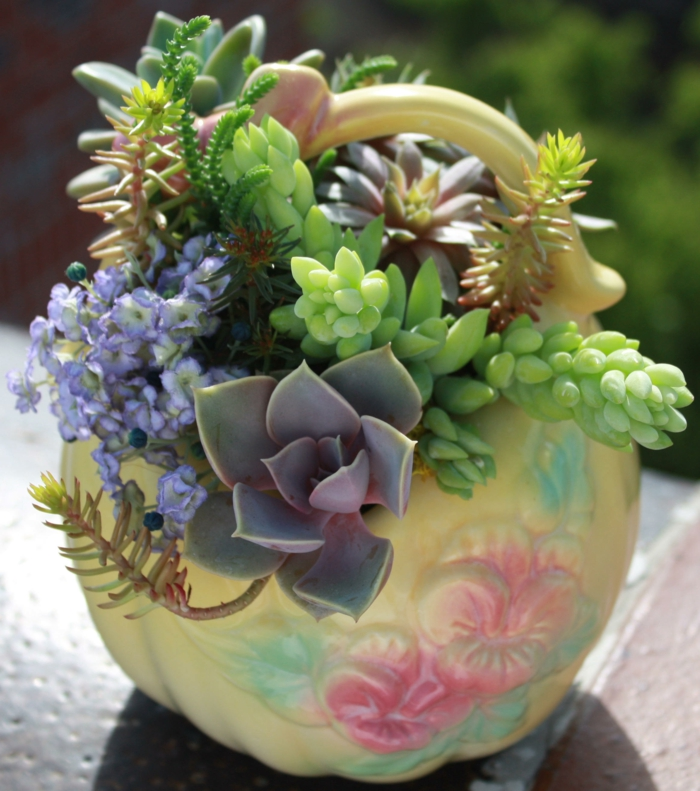 plante succulente dans un joli pot
