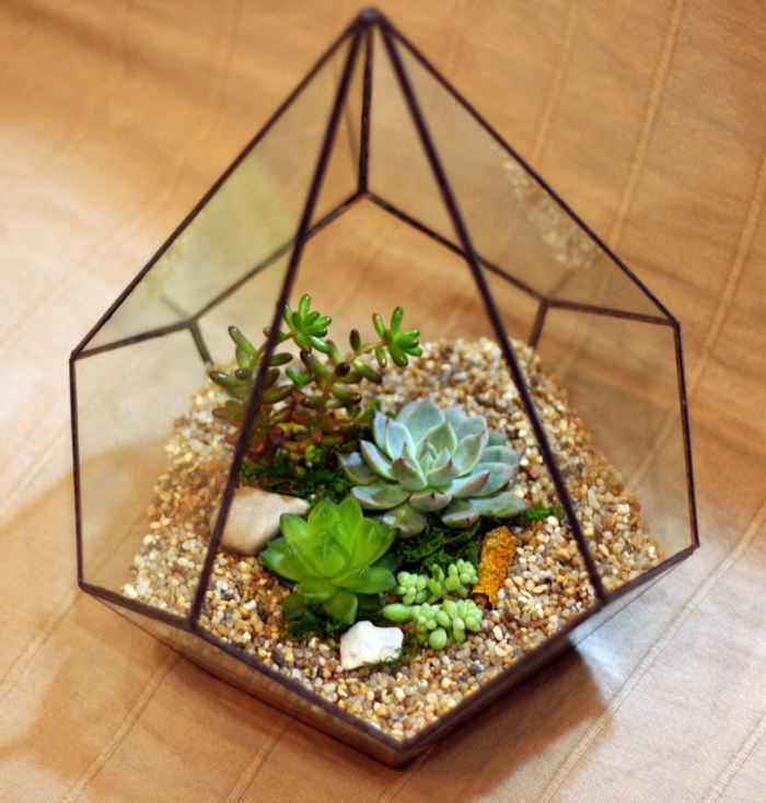 plante succulente diy un terrarium