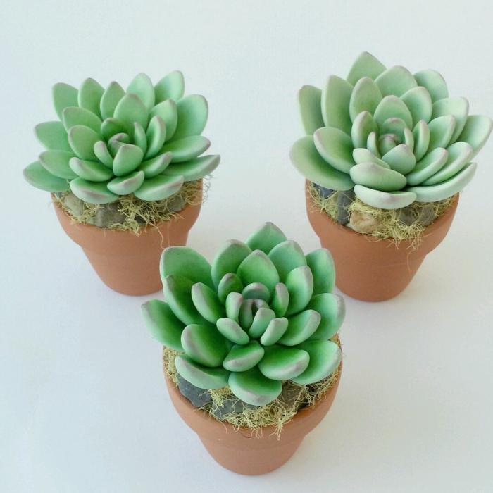 plante succulente idée déco avec echeveria