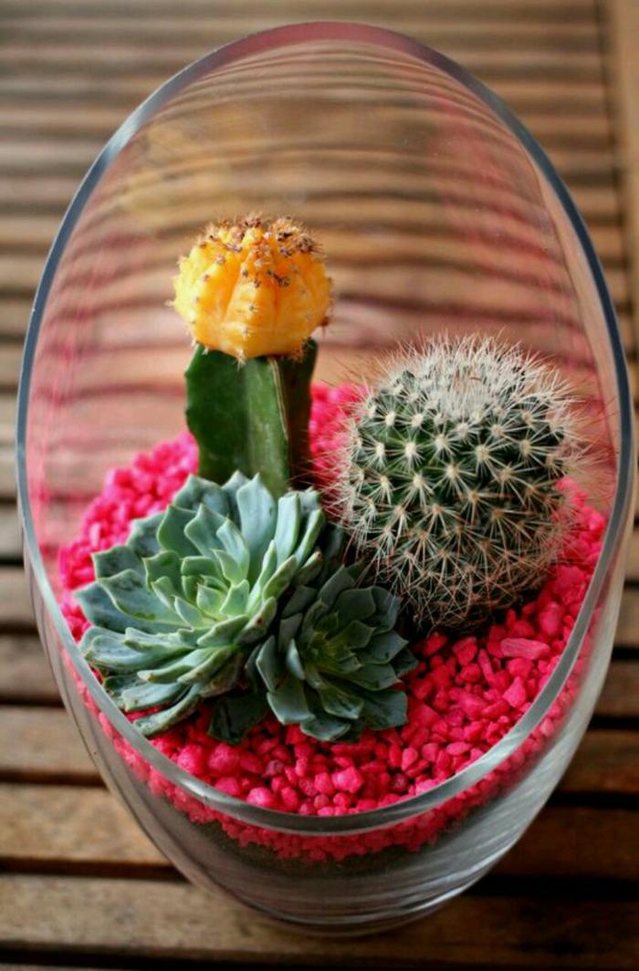 plante succulente idées déco