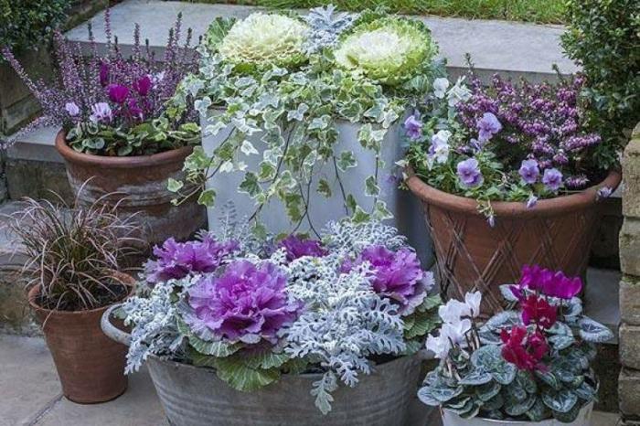 planter végétaux jardinière d'hiver