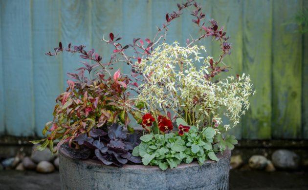 jardinière d'hiver