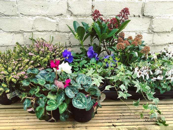 plantes résistantes au gel jardinière d'hiver