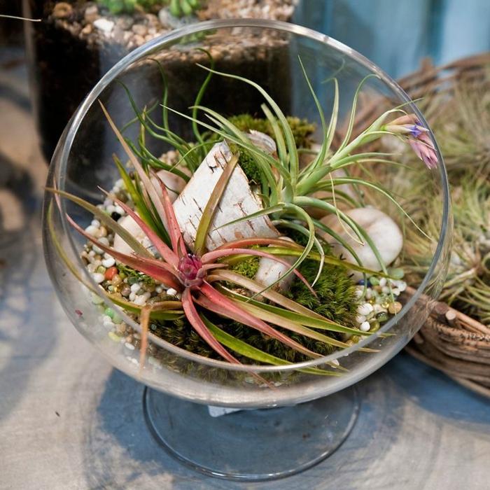 réalisation terrarium plantes grasses