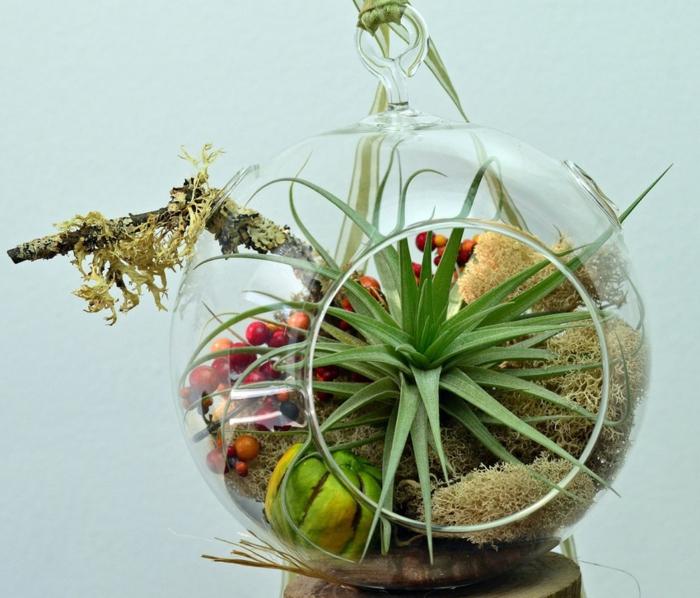 superbe terrarium plantes grasses