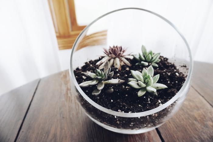terrarium avec une plante succulente