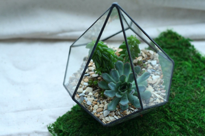 terrarium facile à faire avec une plante succulente