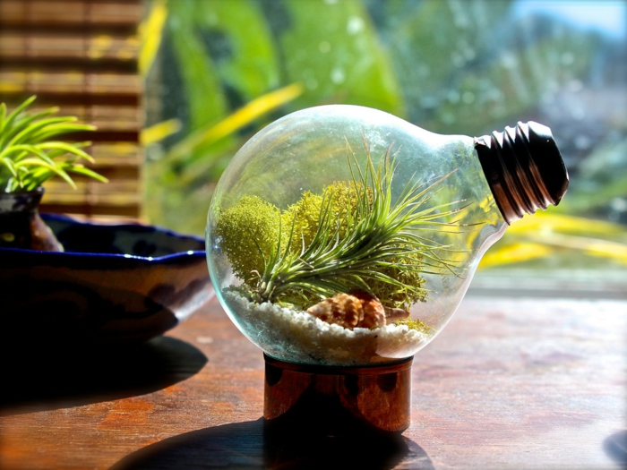 terrarium plantes diy ampoules électriques