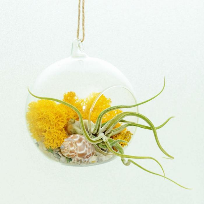 terrarium plantes grasses à faire soi-même