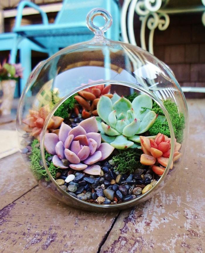 terrarium plantes grasses de couleurs variées