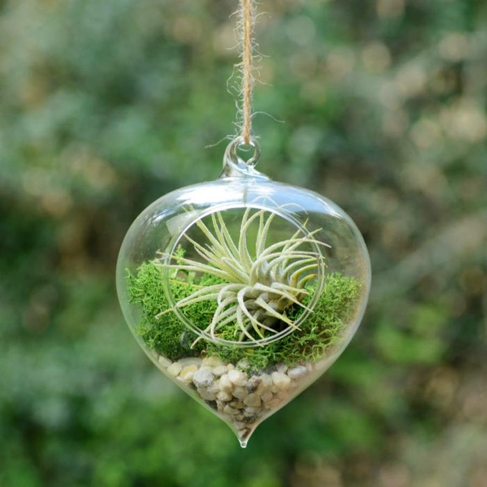 terrarium plantes grasses forme de coeur