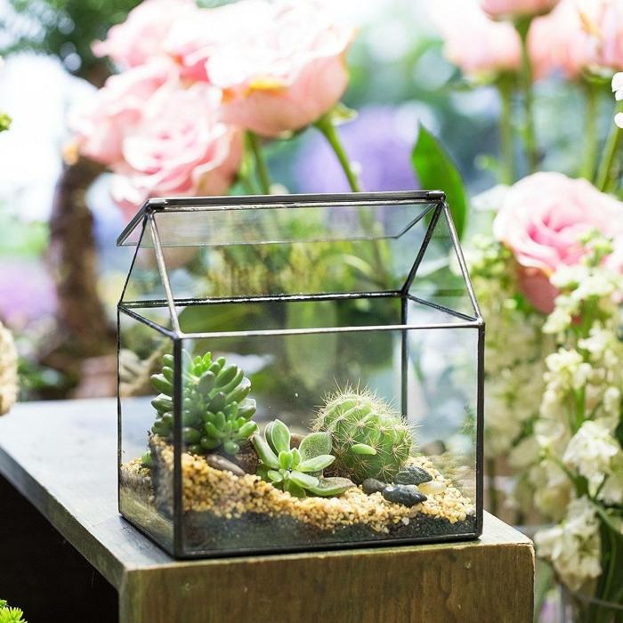 terrarium plantes grasses forme de maison