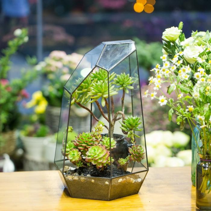 terrarium plantes grasses forme irrégulière