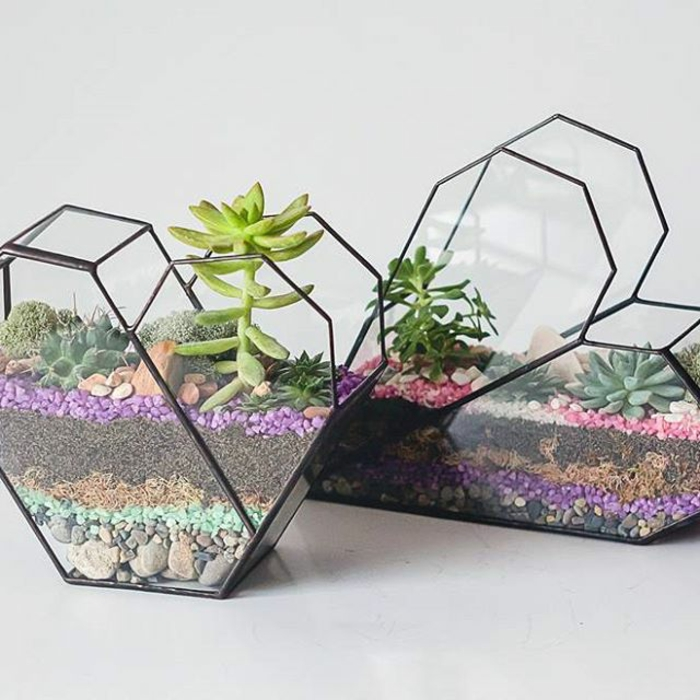 terrarium plantes grasses jolie réalisation