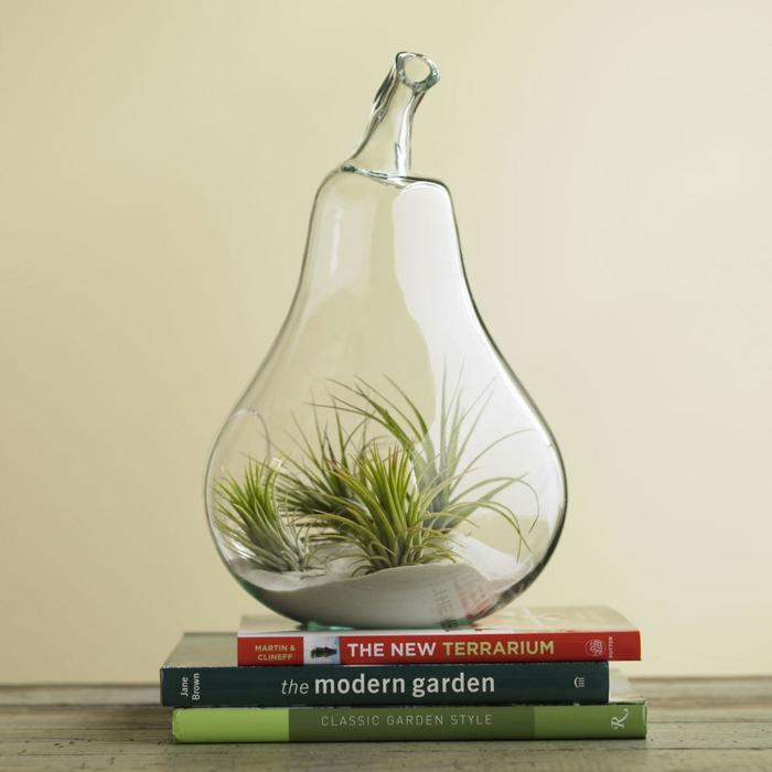 terrarium plantes grasses moderne