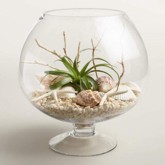 terrarium plantes grasses motifs mer