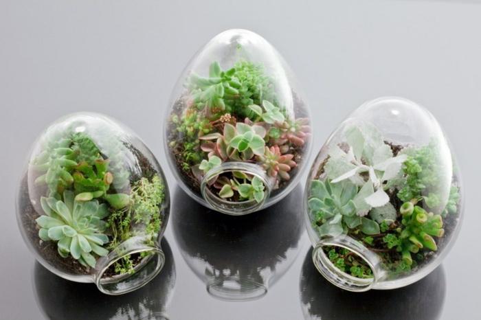 terrarium plantes grasses ovoïde
