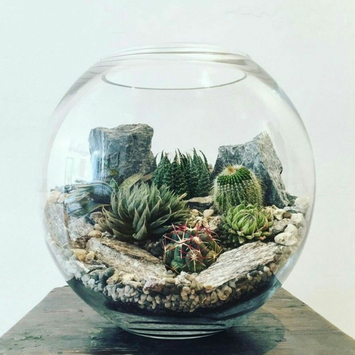 terrarium plantes grasses petit jardin de rocaille