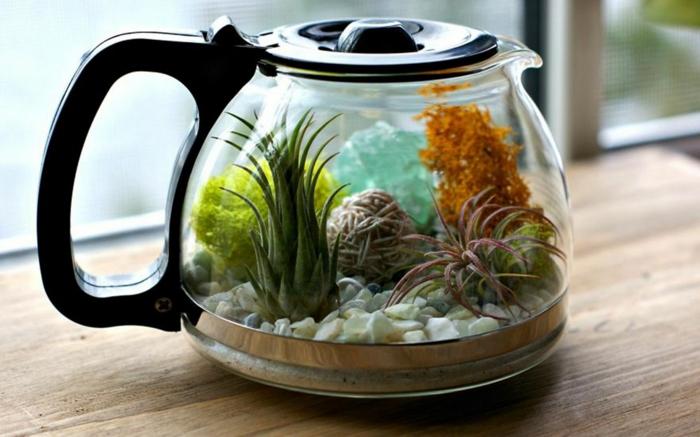 terrarium plantes grasses pot à café