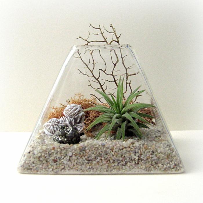 terrarium plantes grasses pyramide