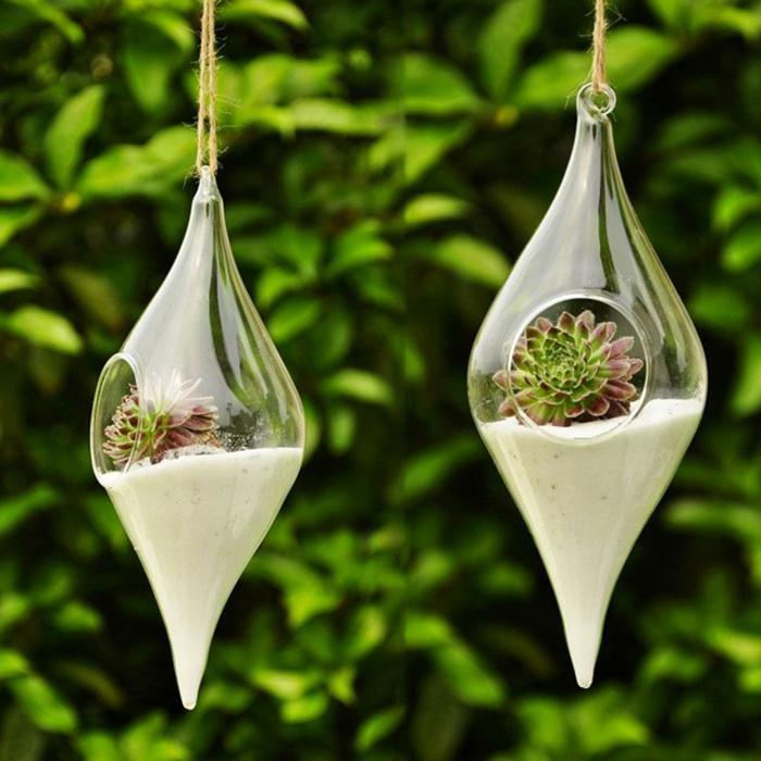 terrarium plantes grasses sable blanc