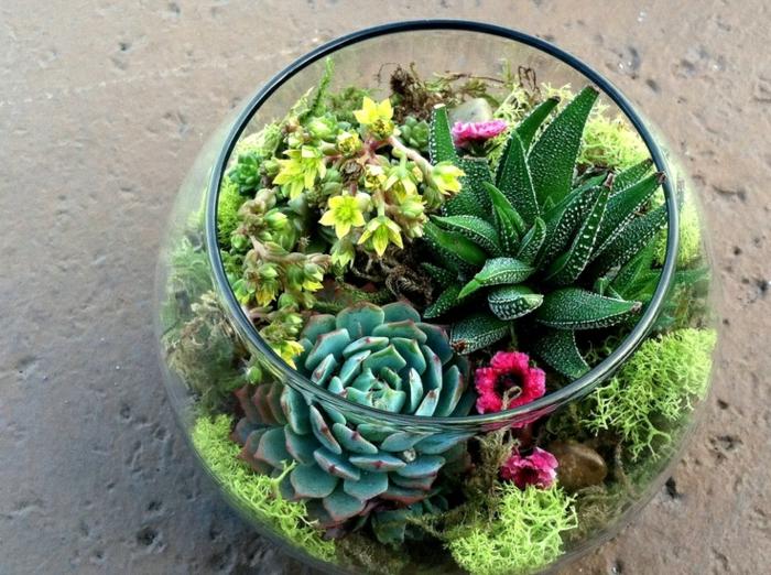 terrarium plantes grasses succulentes