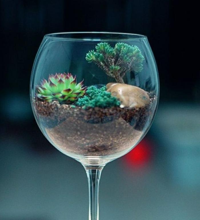 terrarium plantes grasses verre à vin