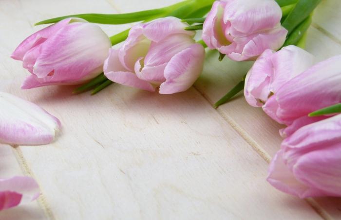 tulipes le langage des fleurs