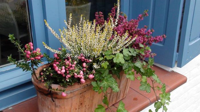 variété de plantes dans une jardinière d'hiver