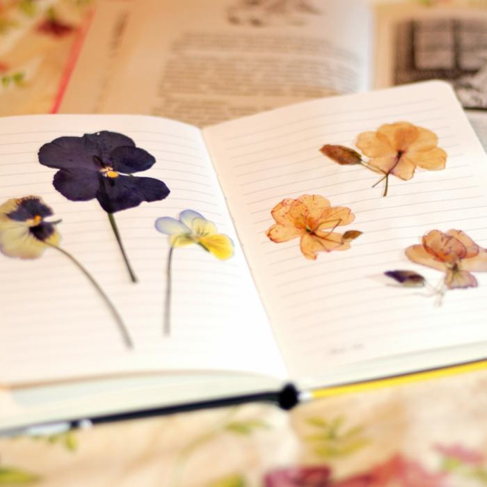 idée avec des fleurs comment faire un herbier