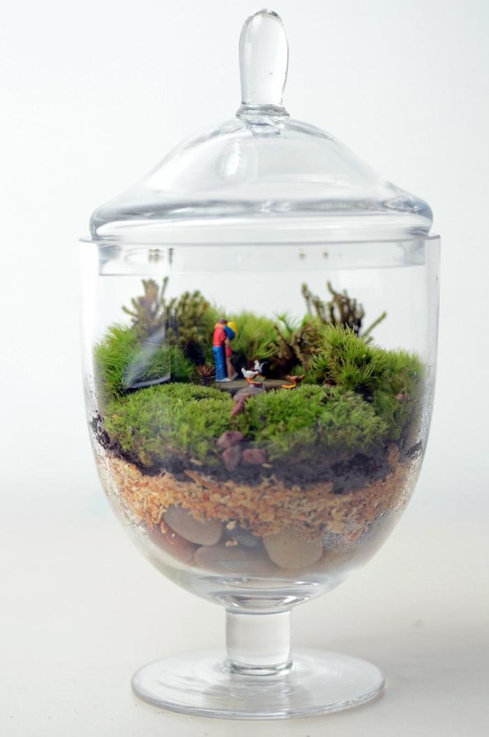 mousse végétale idée de terrarium