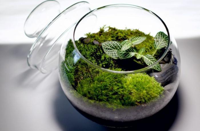 mousse végétale terrarium