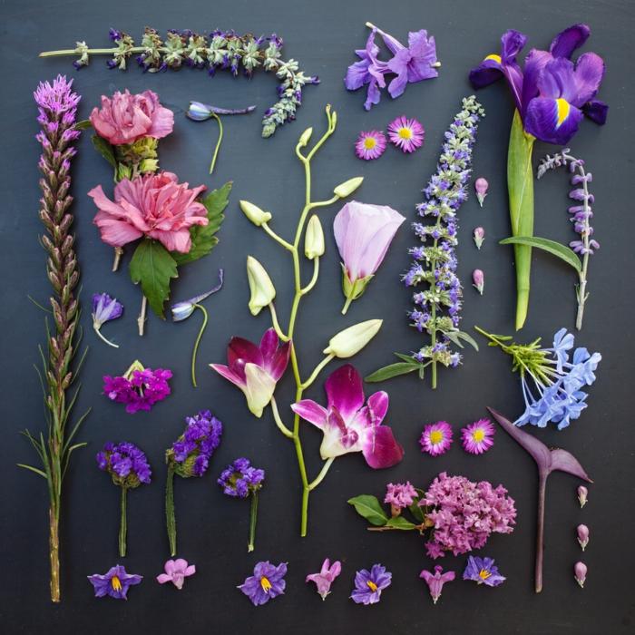 récolte de fleurs comment faire un herbier